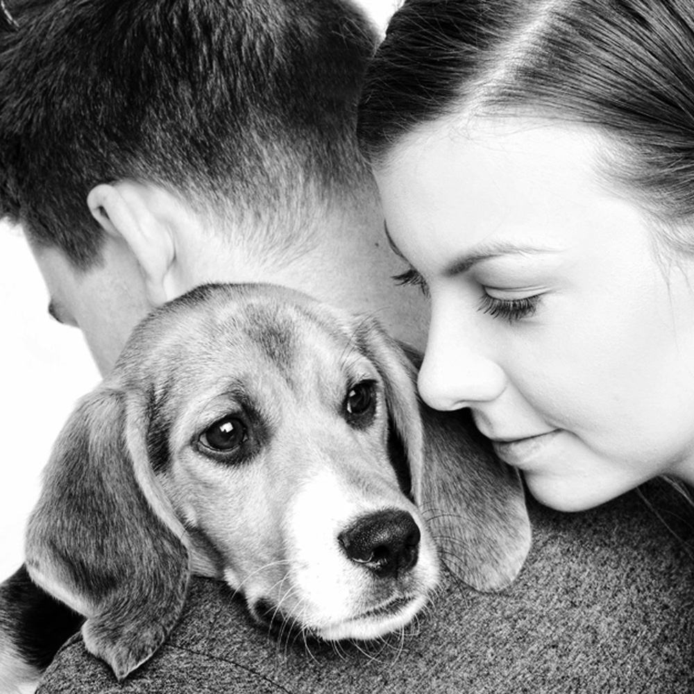 pet photography melbourne eloh photography